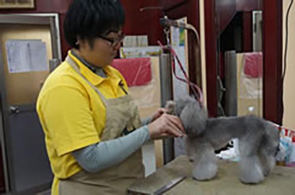 【大阪店】トリマー募集のお知らせ