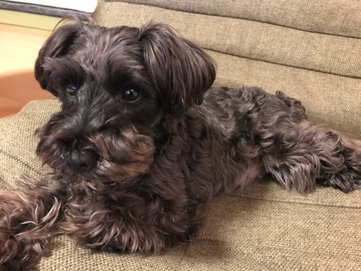 【新着】子犬情報-ブラックビーンズ・モモ族・フレンチブルドッグ・プレサカナリオ