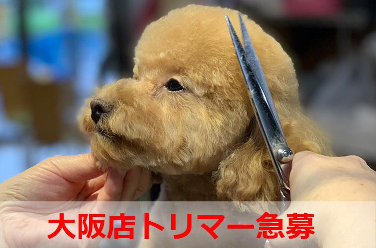 大阪トリマー急募